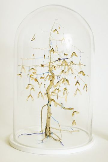 'Exhibit C' - 2012, 50x30x30cm, natural and plastic found material in a glass dome
