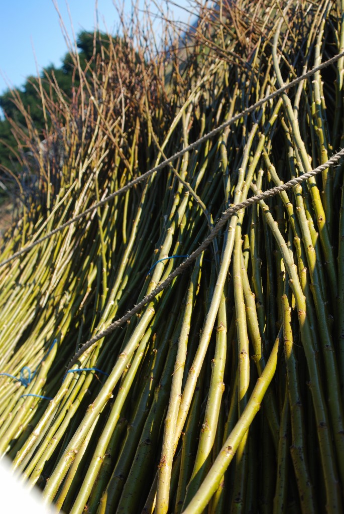 freshly cut willow ready to transport